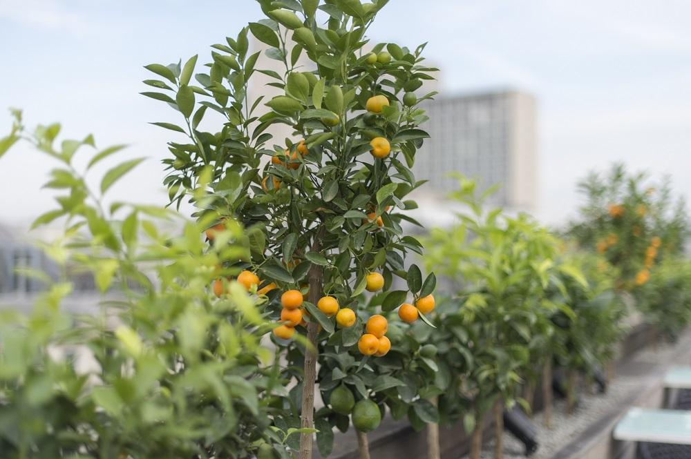 Citrus LOWRES
